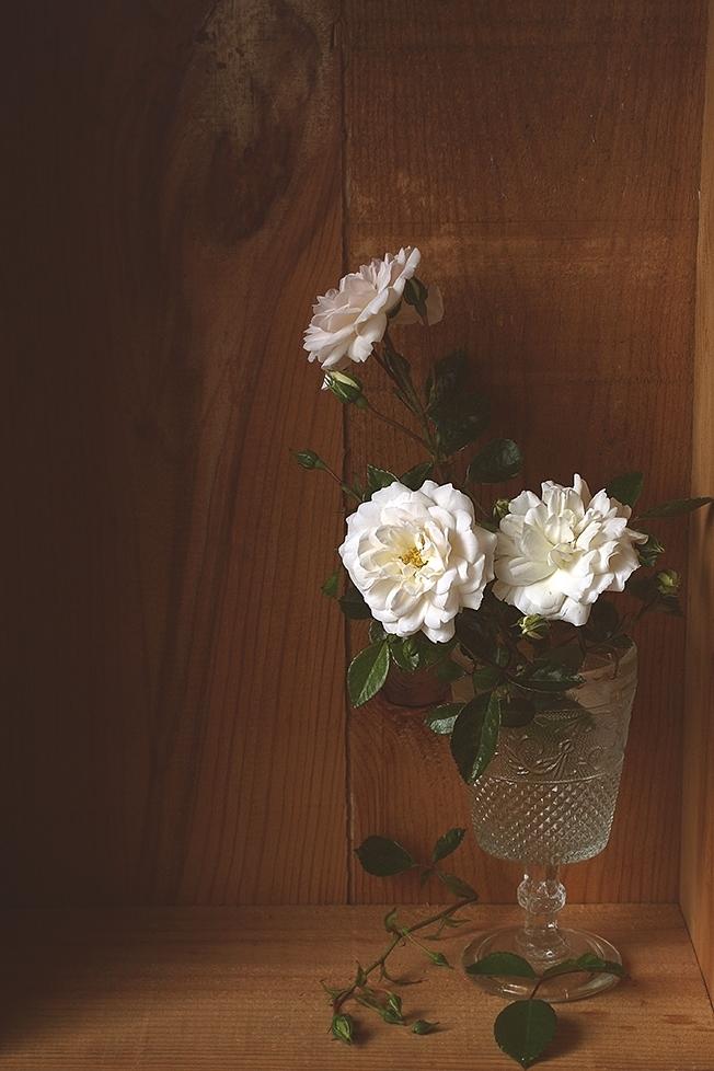 Roses 1 Chili &Tonka