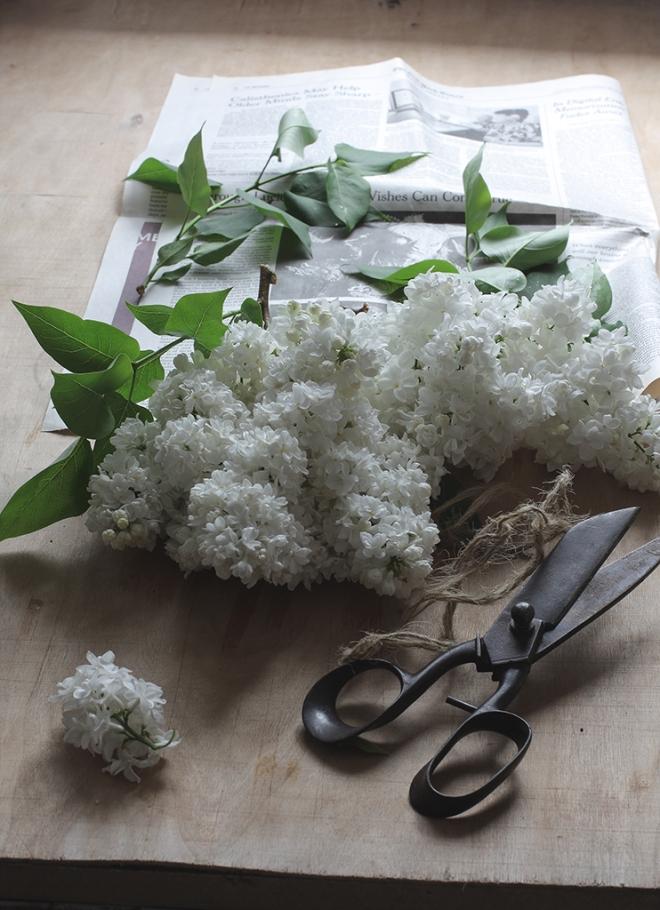 Lilac | chilitonka