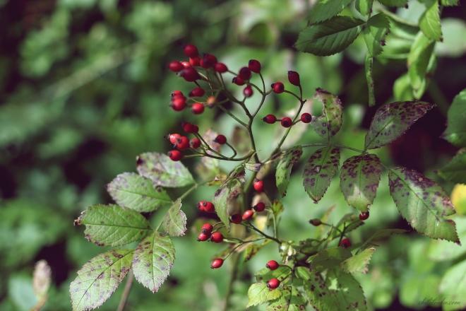 Roślinki | chilitonka