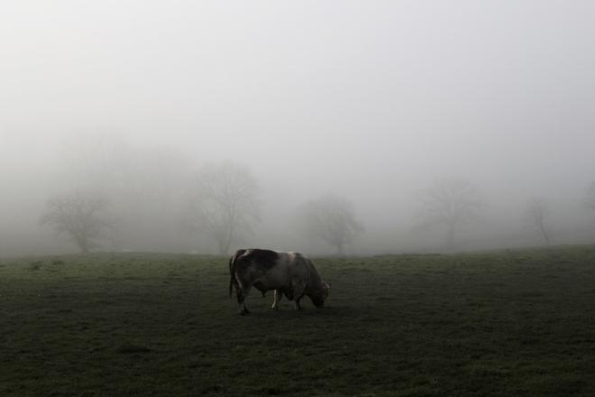 La vache | chilitonka
