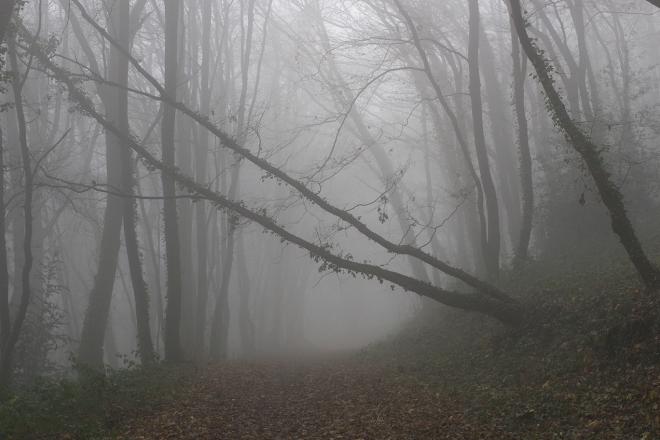 Ggła w lesie | chilitonka