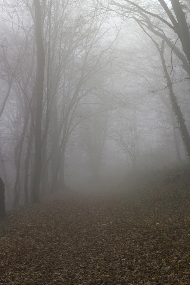 Mgła w lesie | chilitonka