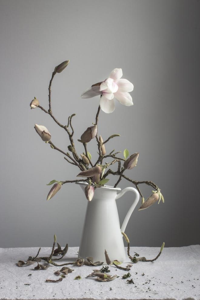 Magnolia | chilitonka