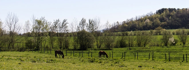 Konie | chilitonka