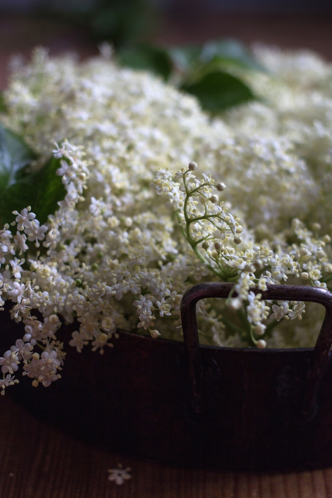 Elderflower | chilitonka