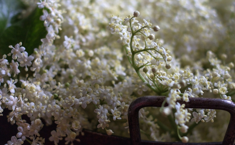 Elderflower ♥