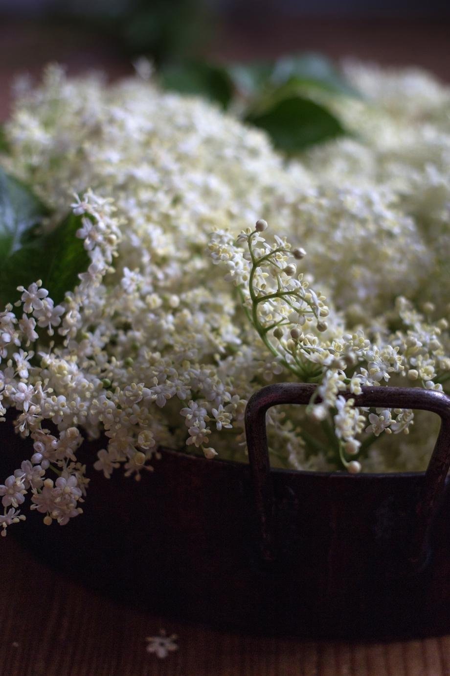 Elderflower | chilitonka